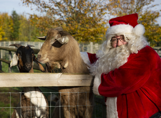 Father Christmas Experience 2021 at Barleylands